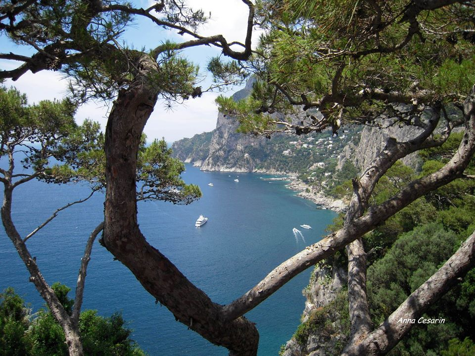 La-costa-di-Capri-fra-gli-alberi.jpg